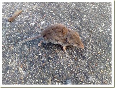 Ein kaltes Mäuschen ...