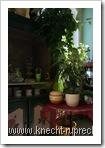 Blumen-Station & Ambiente: Auch der Schrank ist zu erwerben