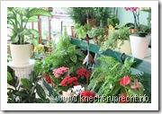 Blumen-Station & Ambiente: Topfpflanzen