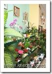 Blumen-Station & Ambiente: die grüne Ecke