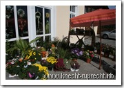 Blumen-Station & Ambiente: Die Auslage