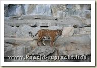 Ein trauriger Tiger ...